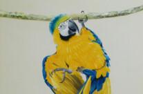 Hand Painted Rainforest Mural